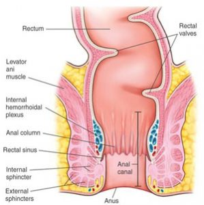 Diagram-of-the-Rectum